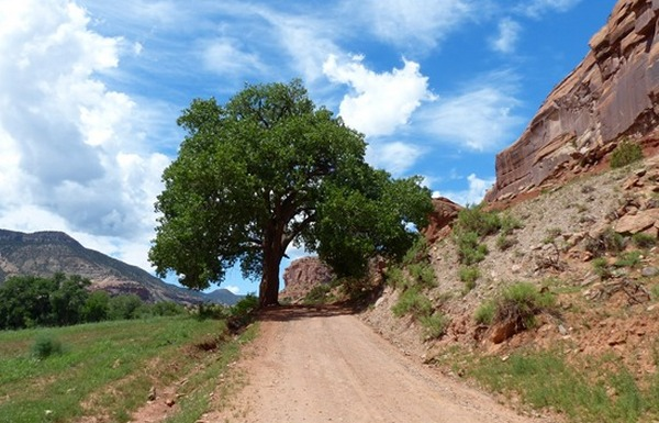 Dominguez Escalante Nca Western Colorado Outdoors